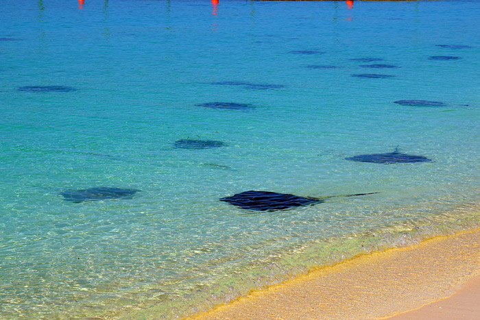 As raias em Castaway Cay