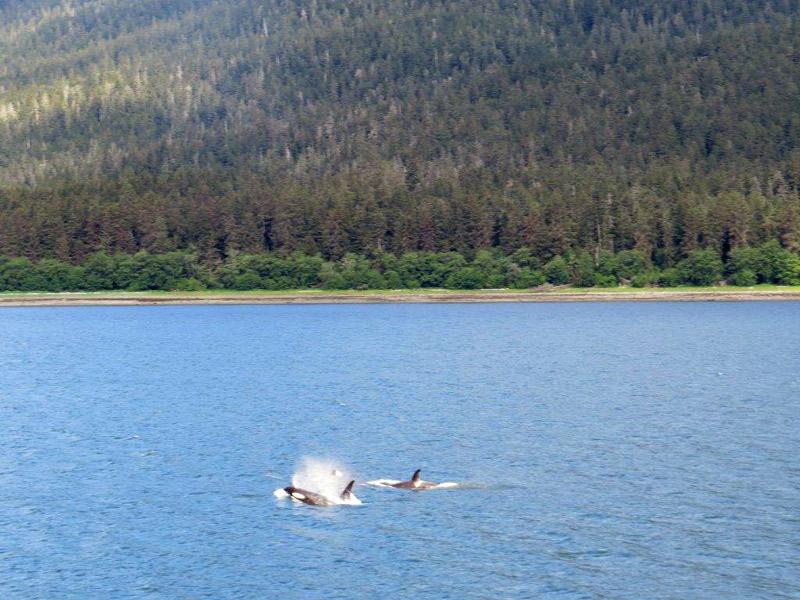 baleiasorcasalasca