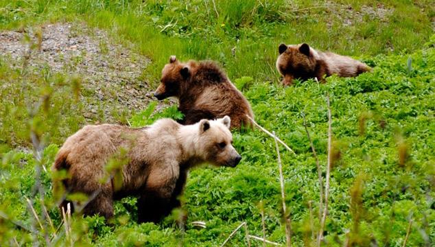 Passeios em Icy Strait Point, um dos melhores lugares para ver ursos no Alasca