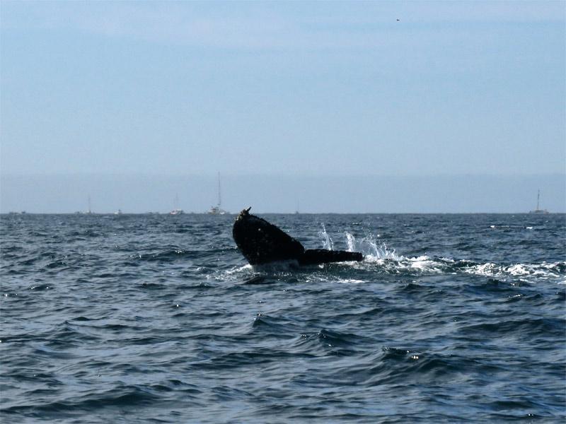 Baleia em Cabo San Lucas