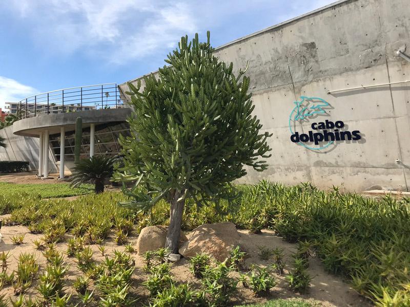 Cabo Dolphins para nadar com golfinhos em Cabo San Lucas