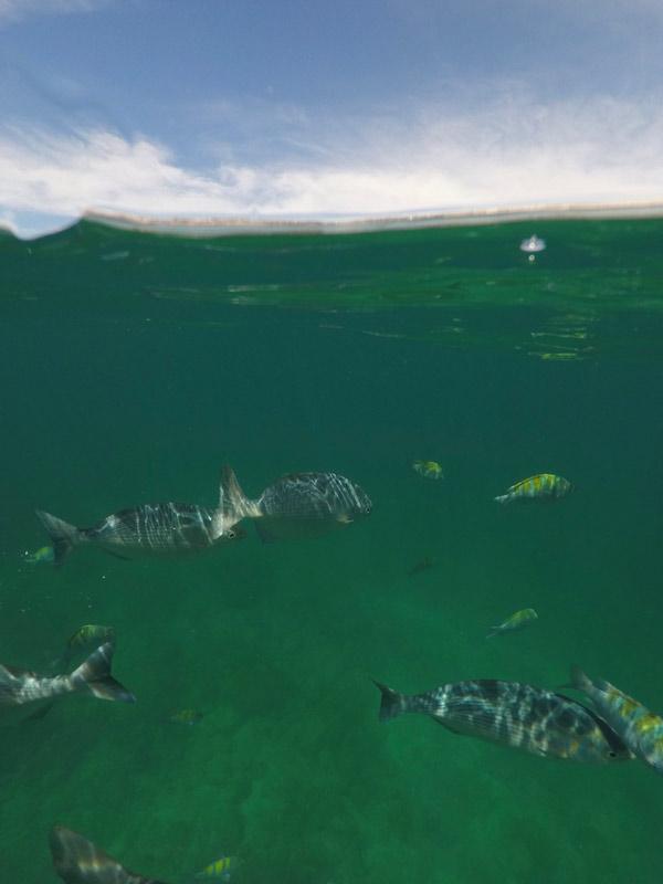 Snorkel em Chileno Bay