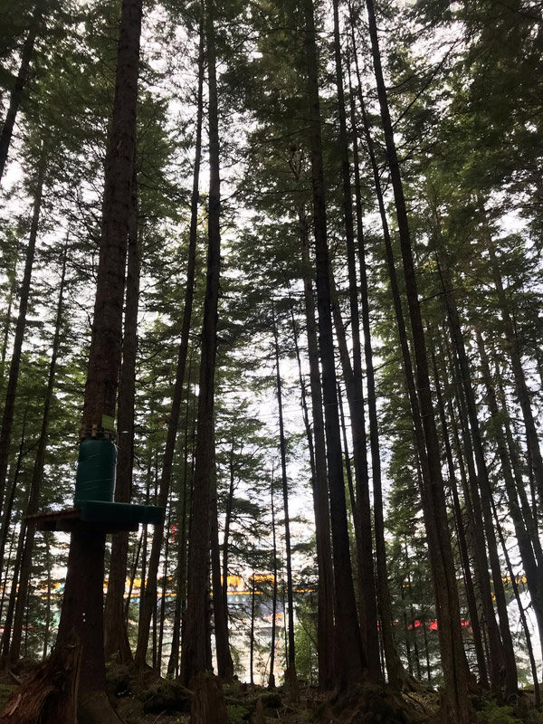 floresta-em-icy-strait-point-alasca