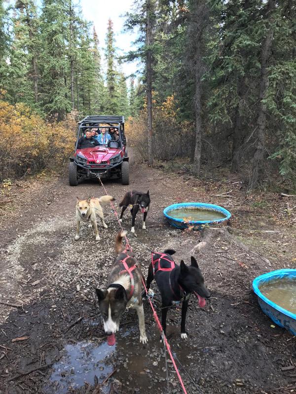 passeio-em-skagway-dogsledding-no-alasca